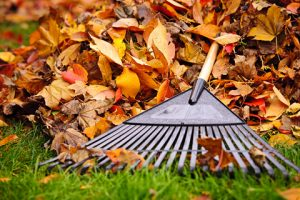 BeneFIT Physical Therapy how to rake leaves