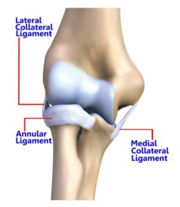 Elbow joint, elbow pain, elbow anatomy, UCL tear, ulnar collateral ligament